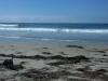 stinky-beach-kelp